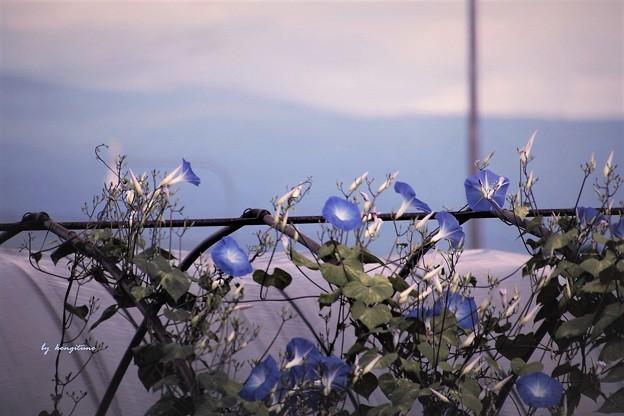Photos: 畑の脇で