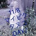 11/8マイピクタヌコ&アマビエ様DAY♪開催