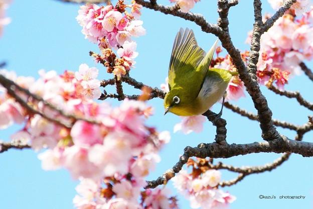 春は大忙し♪