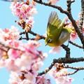 Photos: 春は大忙し♪