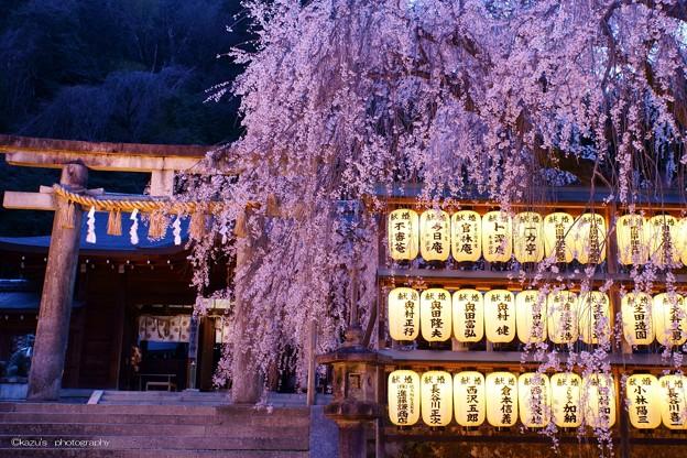大石桜ライトアップ♪