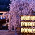 Photos: 大石桜ライトアップ♪