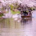 京都伏見の十石船♪
