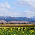 Photos: 春の四重奏♪