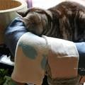 Photos: 寒そうにしていたのでニットをかけたよ。