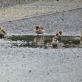 Photos: 雀の行水