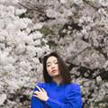 Photos: 桜雫