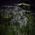 Photos: 石垣しだれ