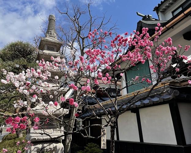 小さい桜 み~つけた!!