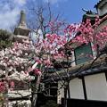 Photos: 小さい桜 み~つけた!!