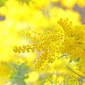 Photos: 黄金色に輝いて♪