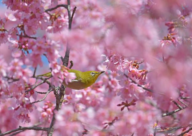 Photos: 桃色の海に♪
