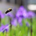 飛び回る蜂さんに^^