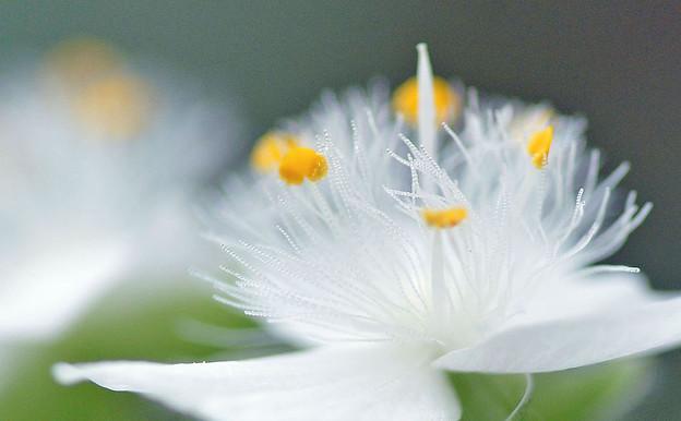 Photos: 白い妖精さん♪
