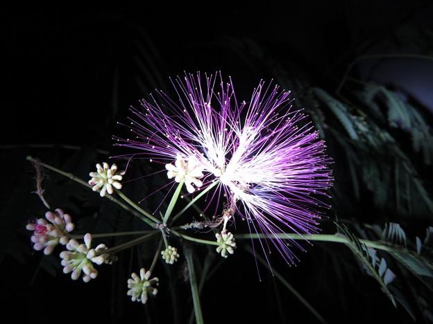 Photos: 美しさは夜~