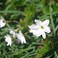 Photos: 春の足下