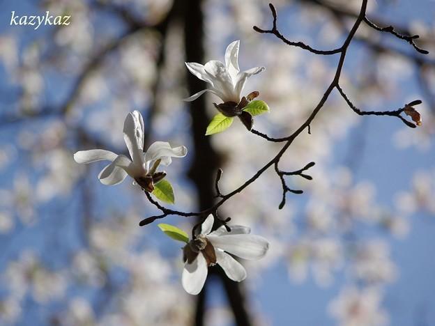 Photos: 春のきらめき