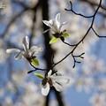 春のきらめき