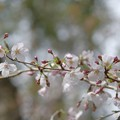 Photos: 春染まり