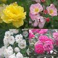 Photos: 園の外