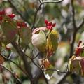 Photos: 秋の色付き