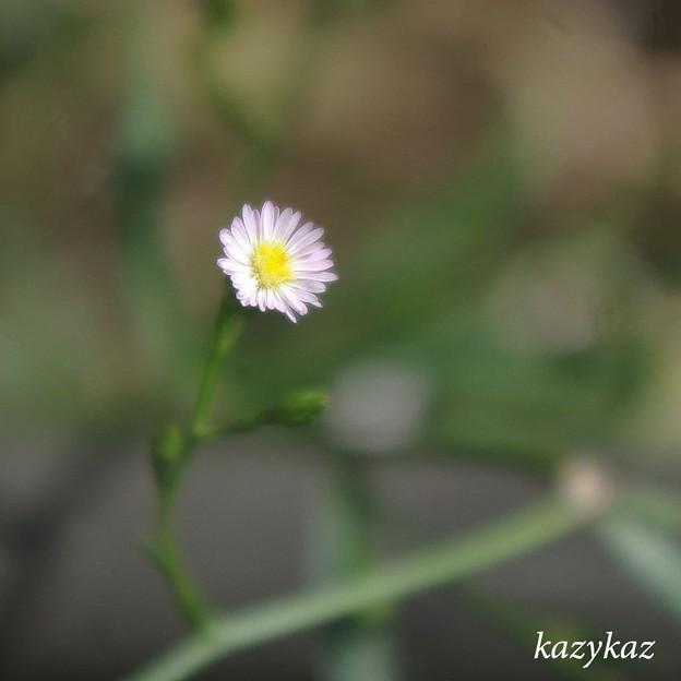 Photos: ひたむき