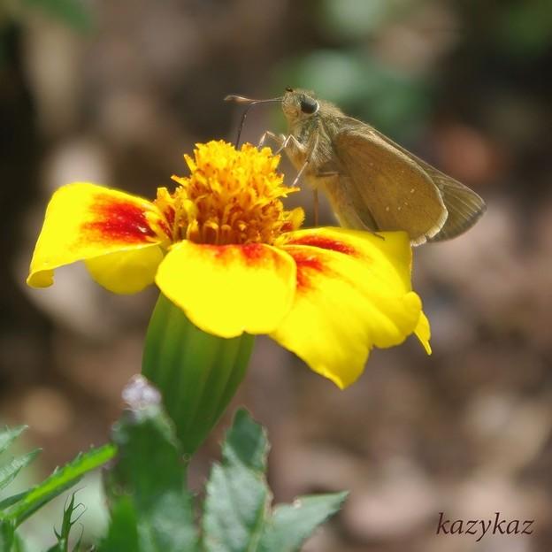 ちゅーるちゅーる蝶ちゅーる<ろ>の巻