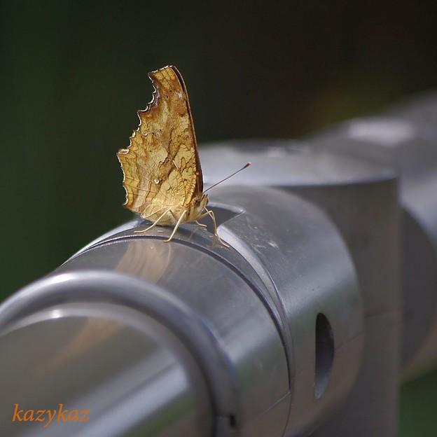 ちゅーるちゅーる蝶ちゅーる<は?>の巻
