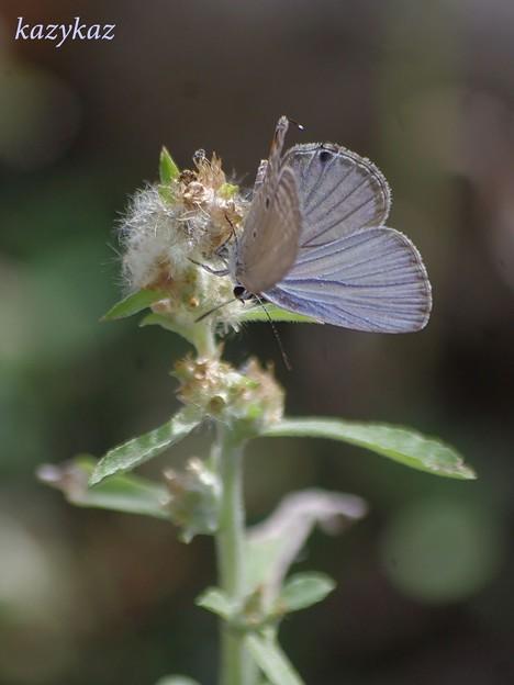 野草と蝶々