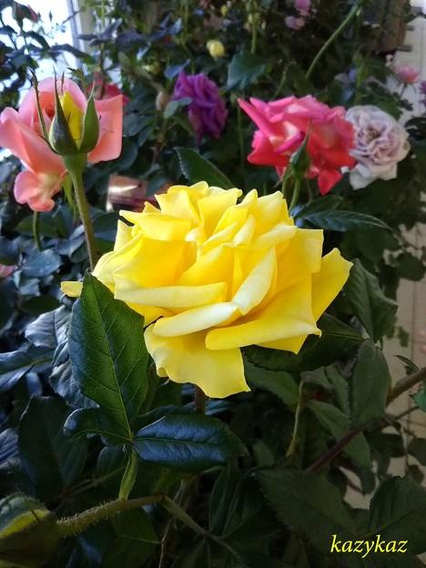 駅ナカのバラたち