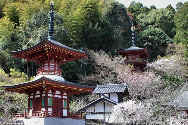 青龍寺の春(1)