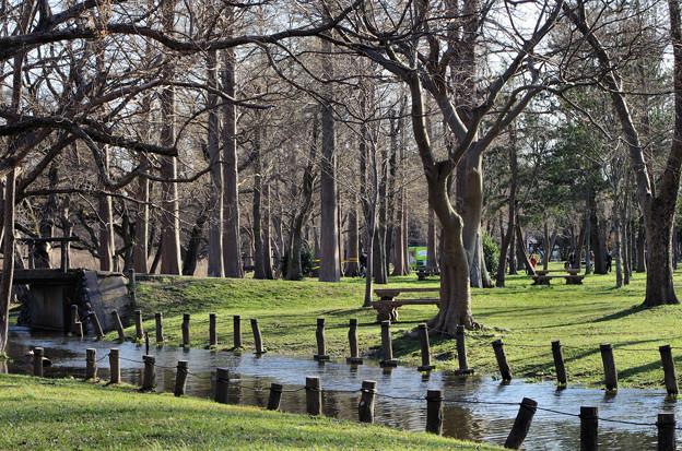 都会の森と川
