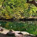 富良野・鳥沼公園1
