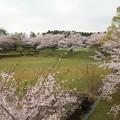 桜満開・・中尾山公園スカイロードから