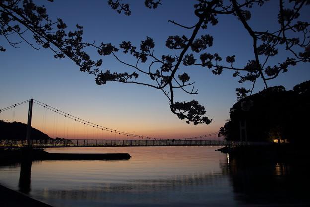 Photos: 黄昏時の桜・・湯の児
