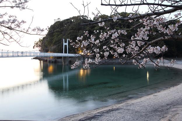 桜・・湯の児(ちょっと明るく)