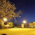 桜の中でナイター・・浜グランド