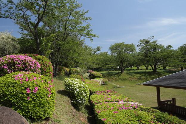 ツツジ・・中尾山公園