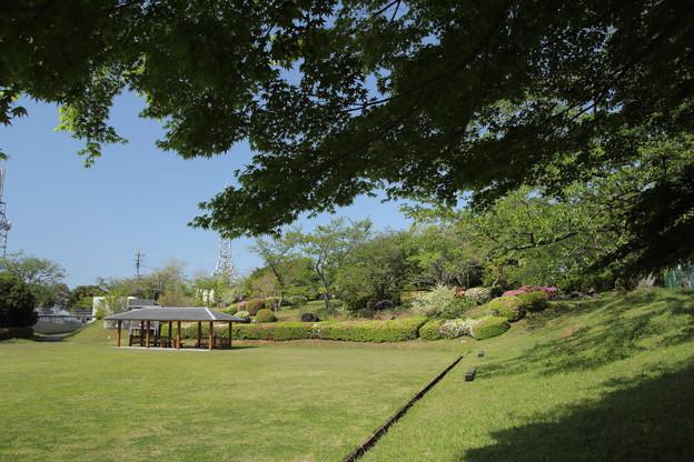 中尾山公園の春