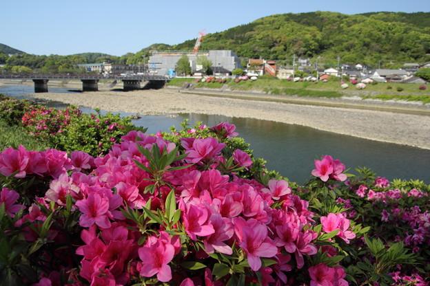 ツツジ・・水俣川
