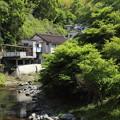湯の鶴温泉入り口の新緑