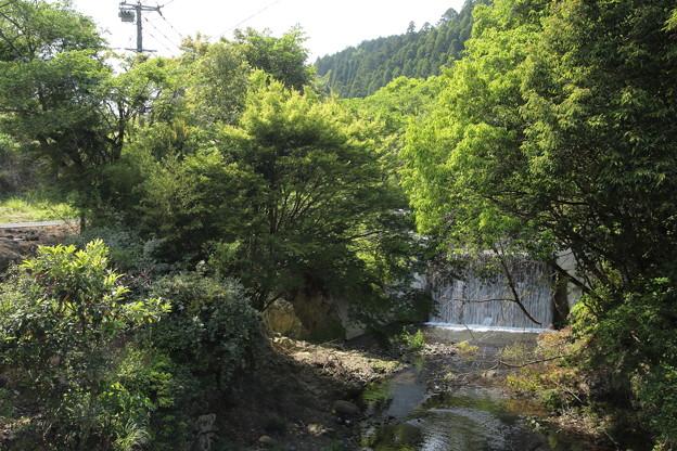 湯の鶴温泉の新緑