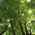 湯出神社の新緑