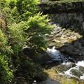 湯の鶴温泉