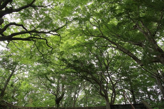 城山の新緑