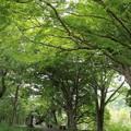 Photos: 城山の新緑