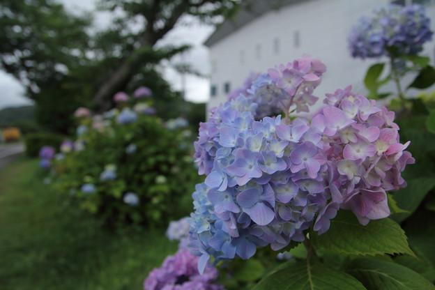 青からピンクへ
