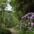 竹林園の梅雨