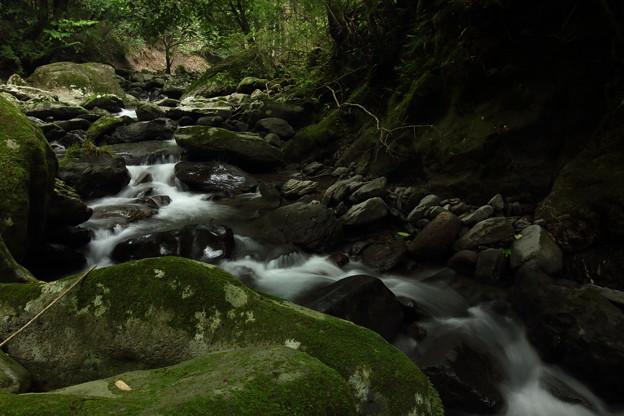 渓流・・のれん滝の上流