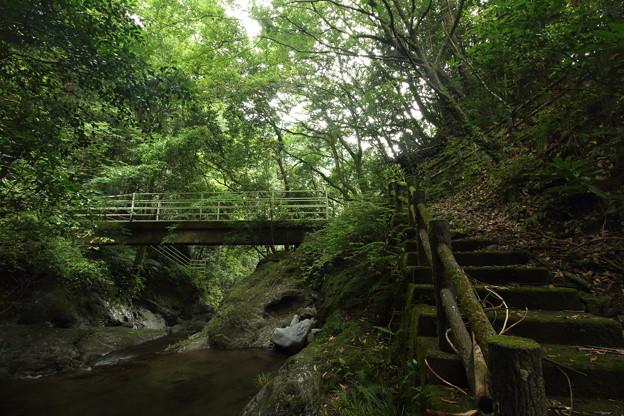 森林浴・・のれん滝上流